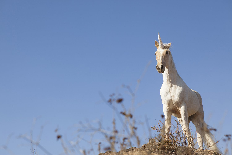 Unicorn on hilltop.