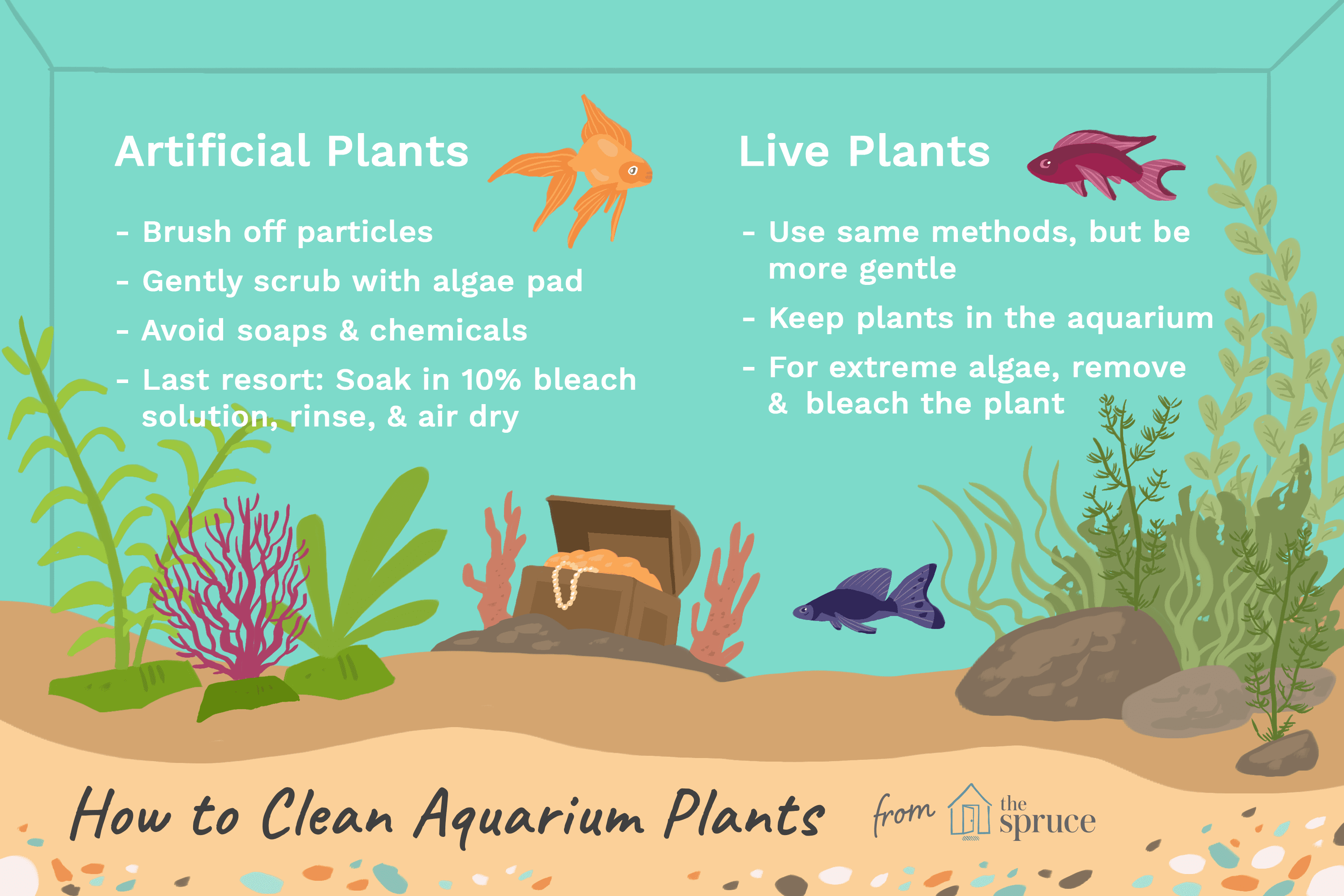 Aquarium Plants Get Dirty With Algae And Need To Be Cleaned