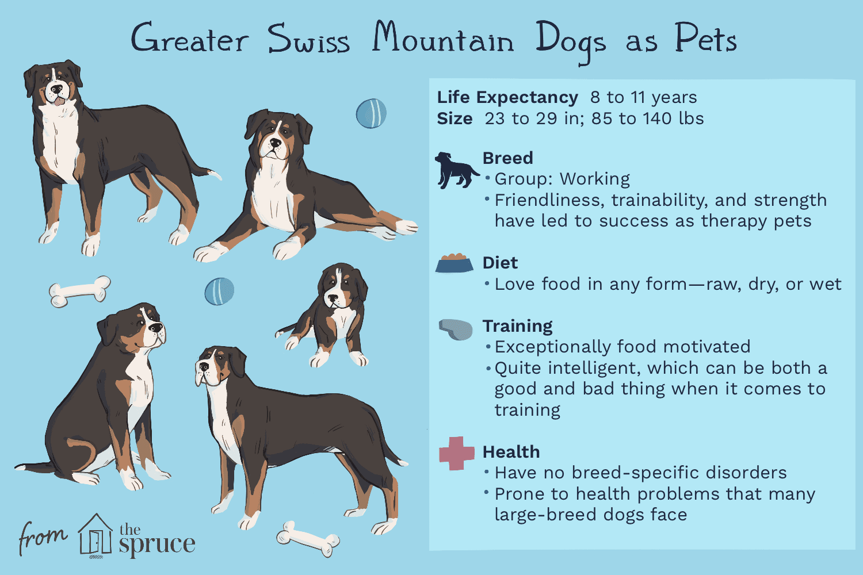Greater Swiss Mountain Dog Swissys Full Profile History