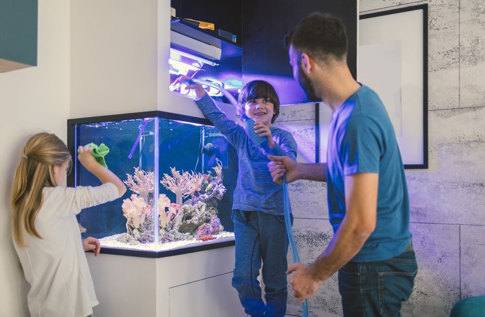 father and two children cleaning fish aquarium