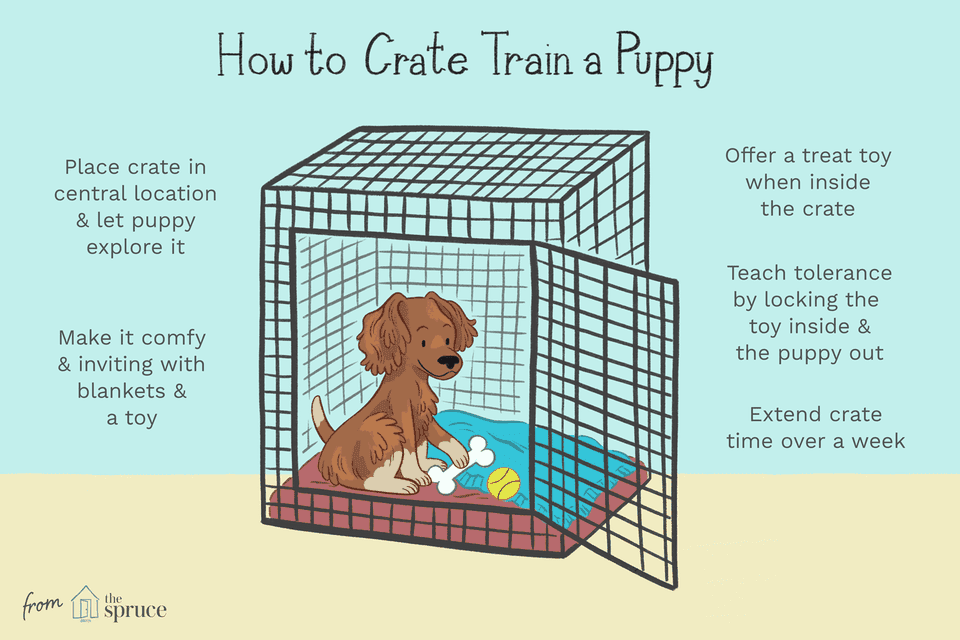 illustration of how to crate train a puppy