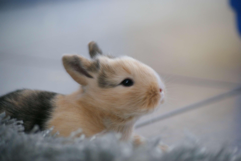 Un conejo bebé