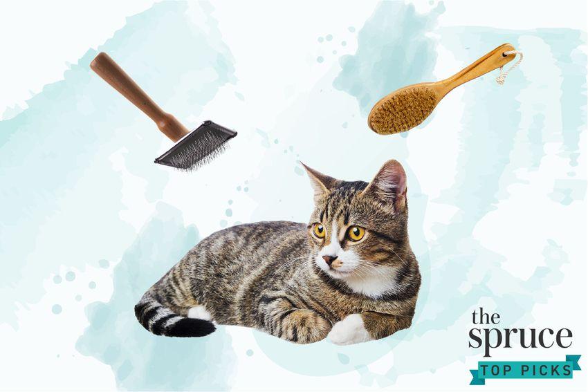 Best Cat Brushes