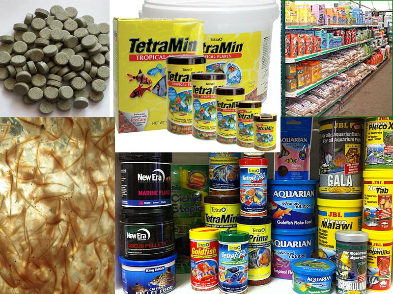 Many Aquarium Fish Food Choices, How do you chose?