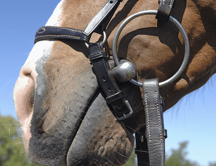 Close-up of a horse carrying a loose ring snaffle bit