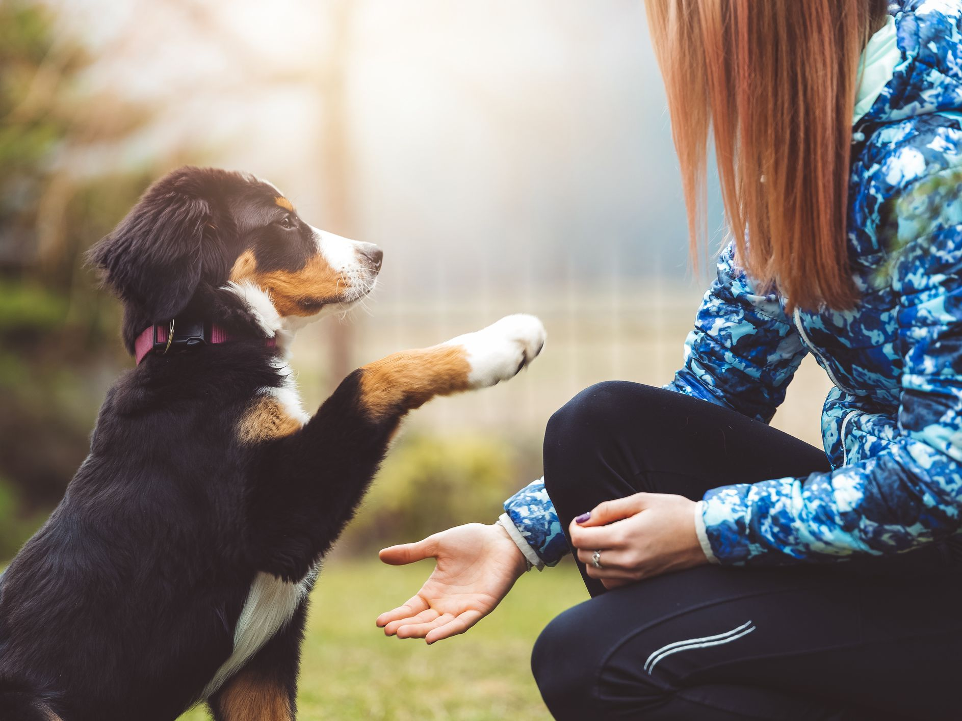 Teach You Dog Well With These Tips