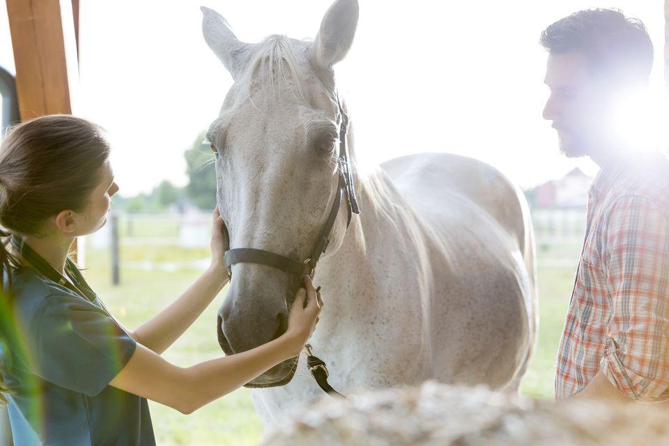 Veterinario examinando un caballo