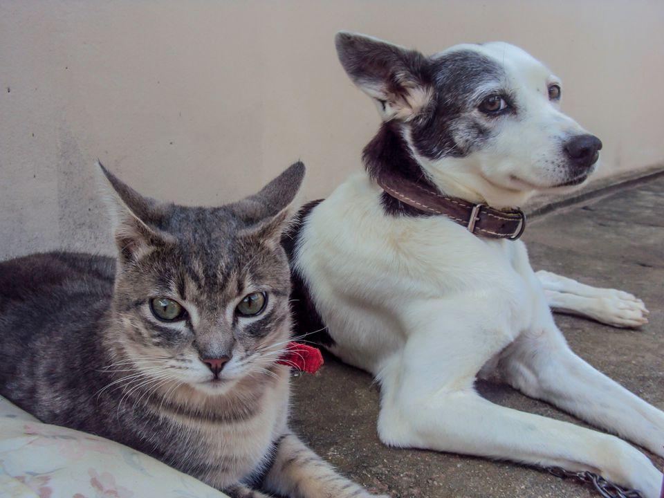 Gato y perro juntos