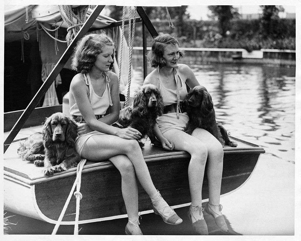 English cocker spaniels enjoying a boating holiday in England, 1935