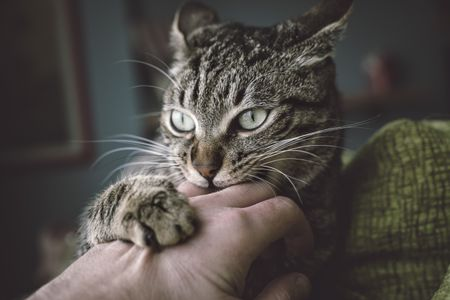 Reasons Why Cats Have Behavior Problems and How to Solve It