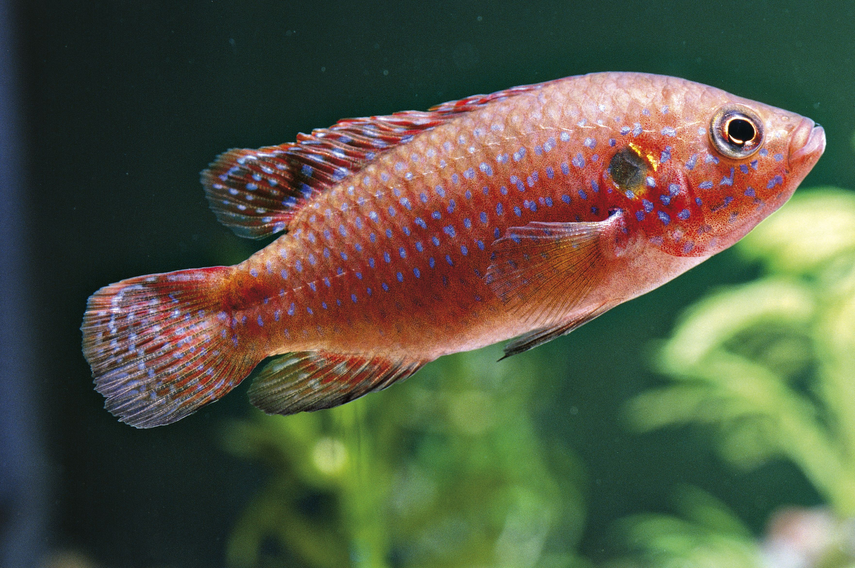 Common Fish Names Beginning With J