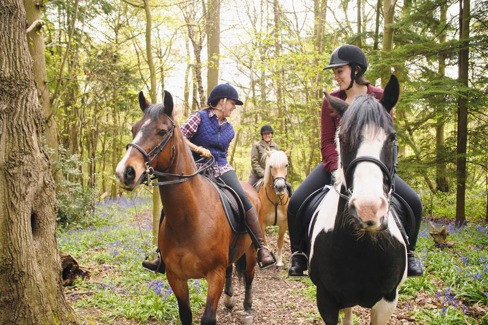 Horseback riders talking in a forest