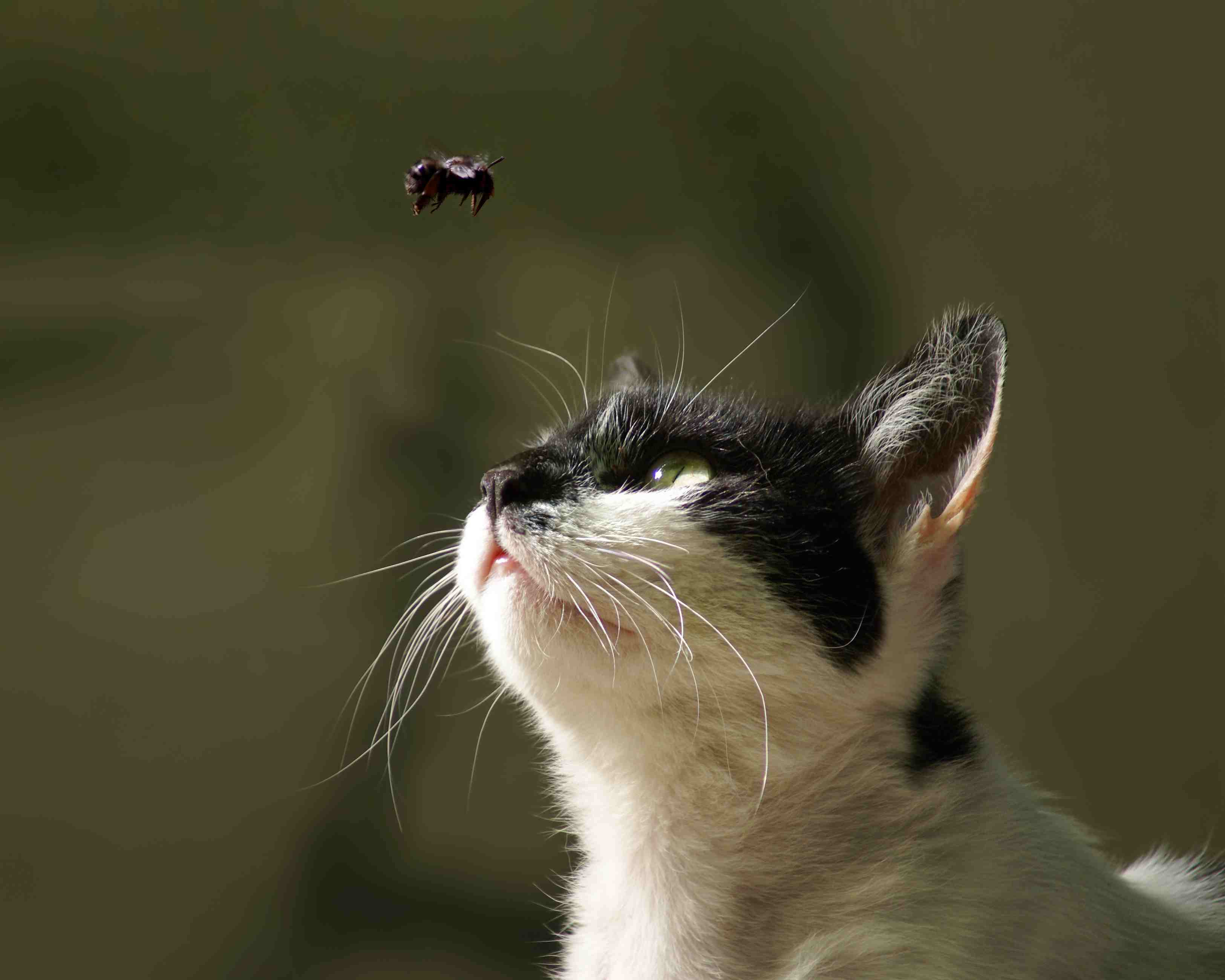 Cat and Bee