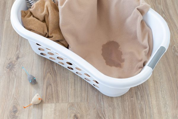 Cat urine on clothing inside white hamper next to toy mice