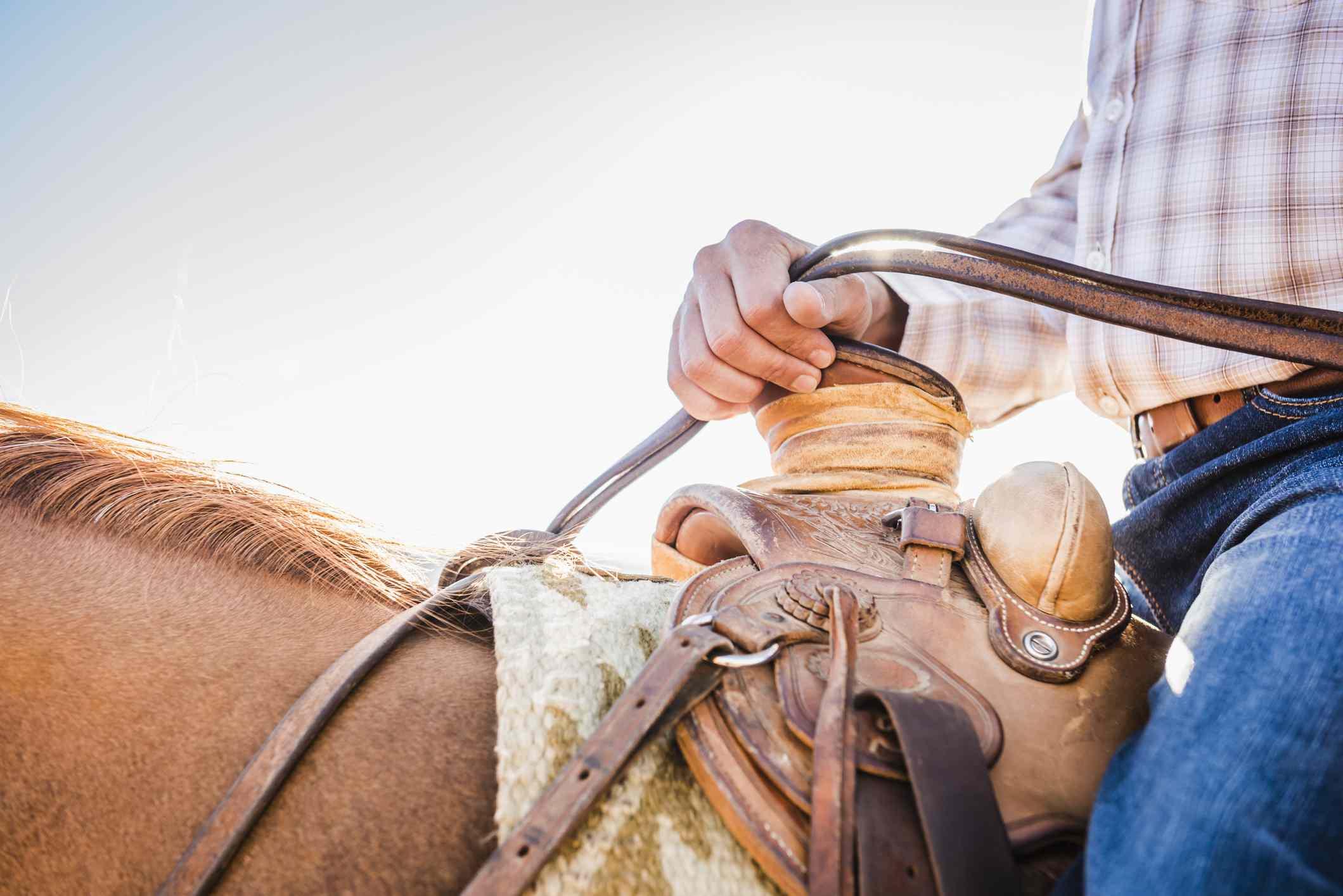 Man holding horse reins