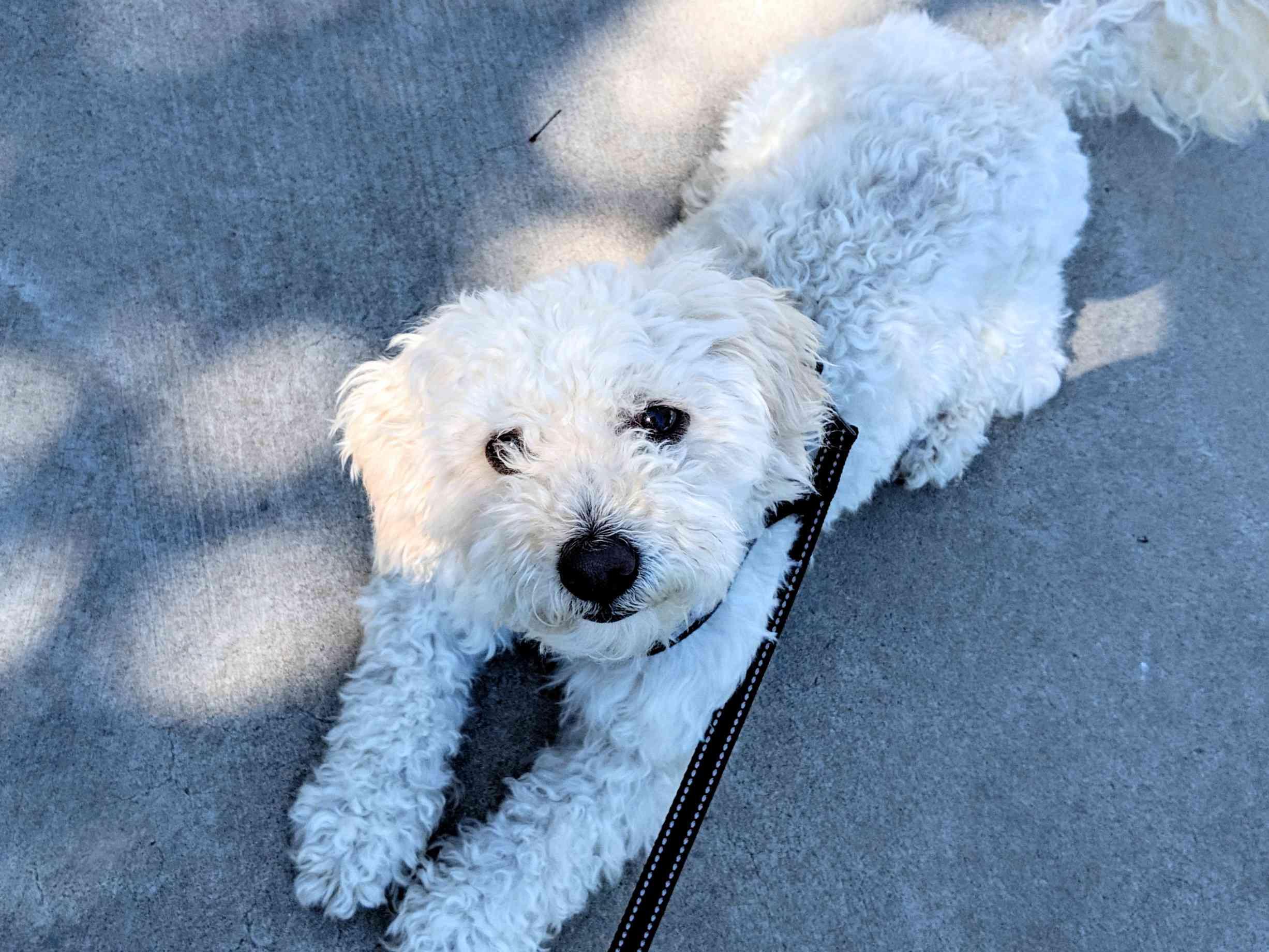 adopción de perros kirby