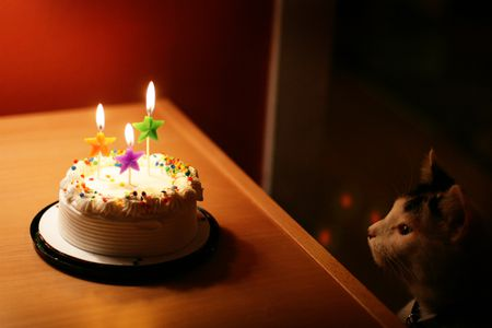 Cat Looking At Birthday Cake