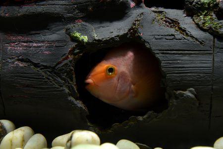 How To Find Your Missing Aquarium Fish