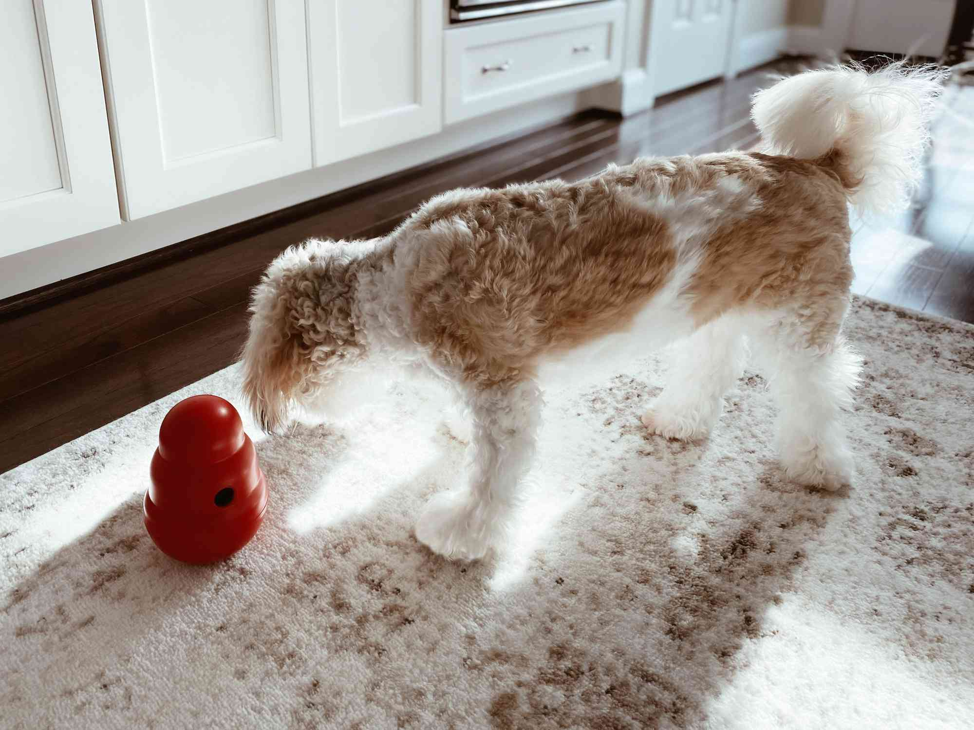 dog sniffing an interactive dog toy