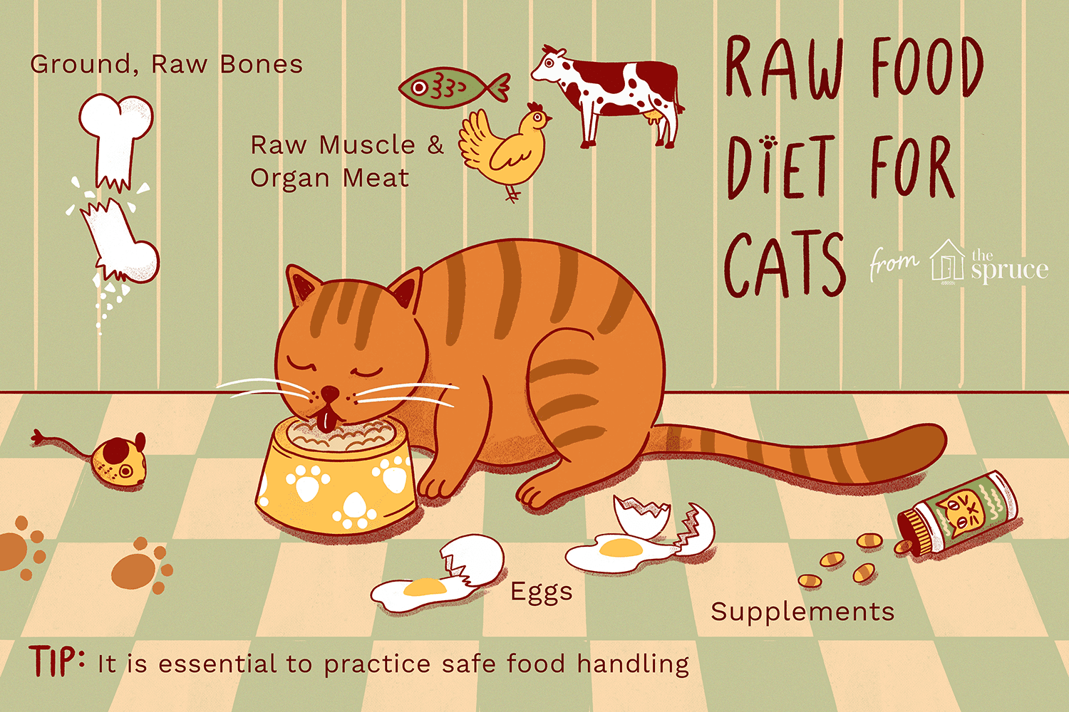 switching cat to raw food diet