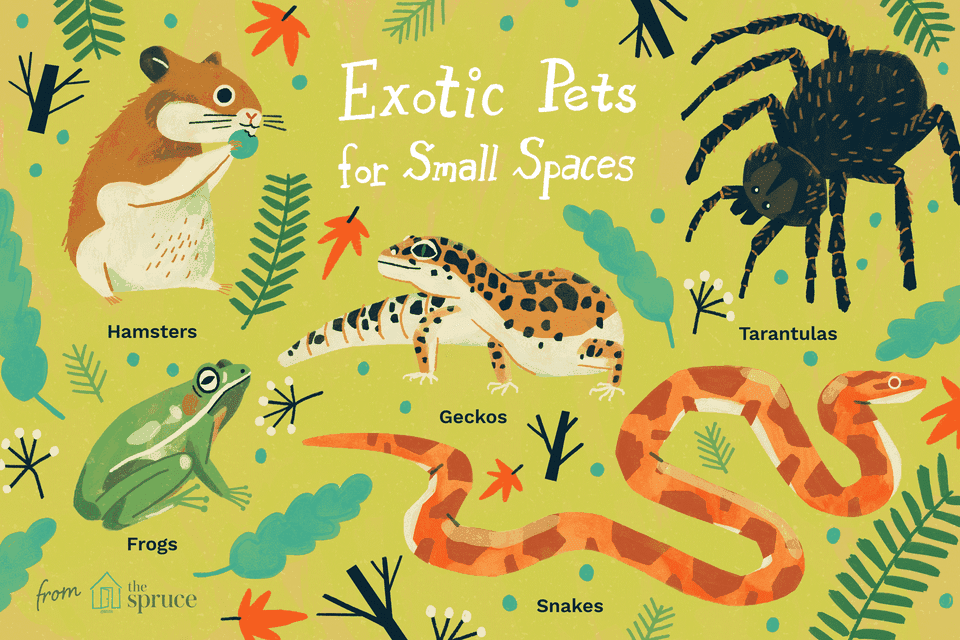 illustration of the best exotic pets for small spaces