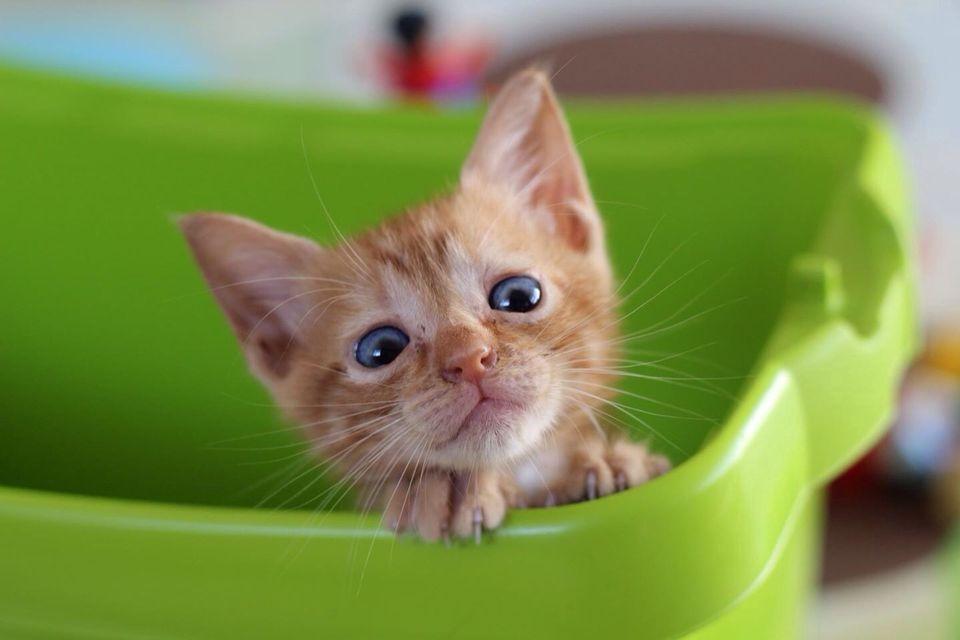 Retrato de gatito en canasta