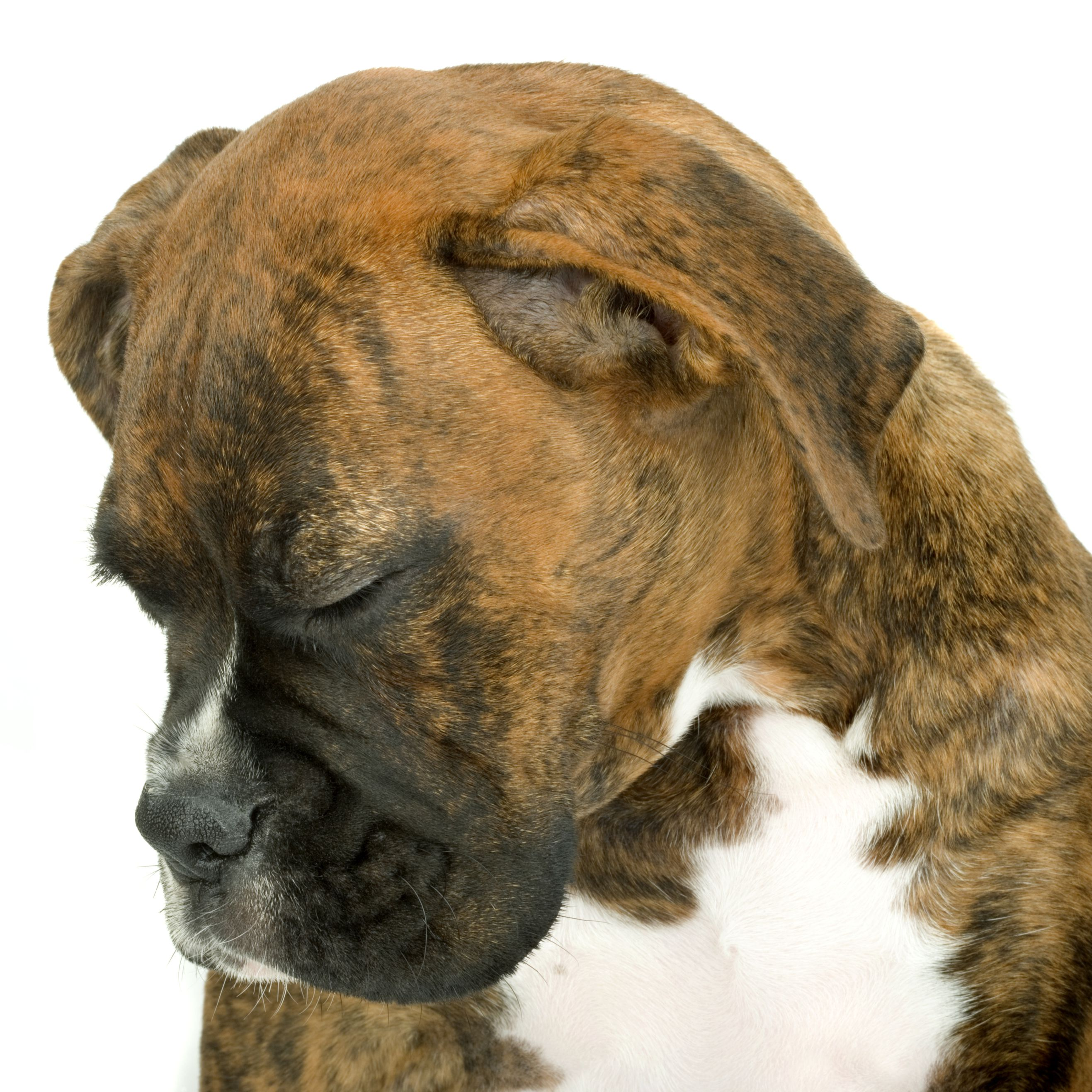 Warning Signs Of Cancer In Dogs