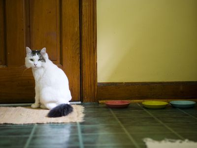 Stop Your Cat From Ing On Rug