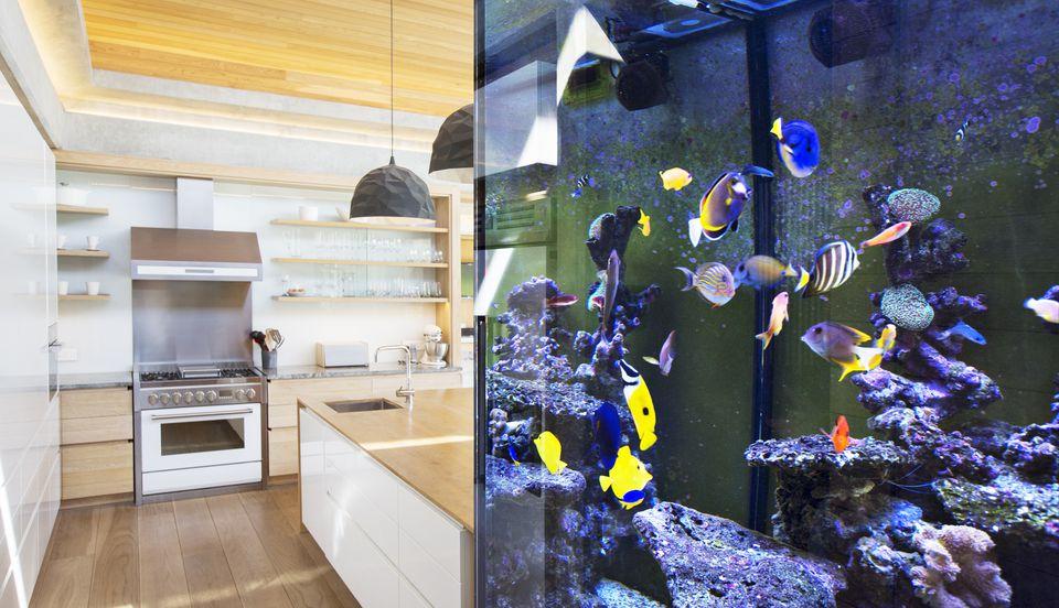 Aquarium of colorful fish