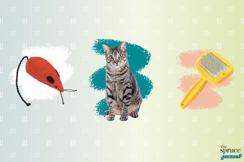 Photo composite of a toy mouse, a cat, and a brush over a crayon brush mark and an ombre green background.
