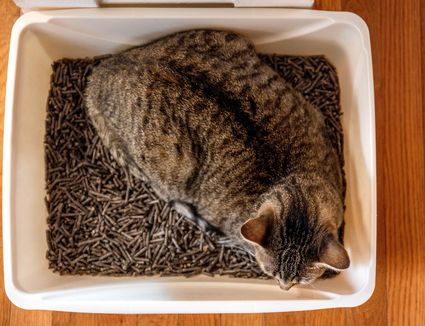 Brown and black spotted cat sleeping in litter box from above