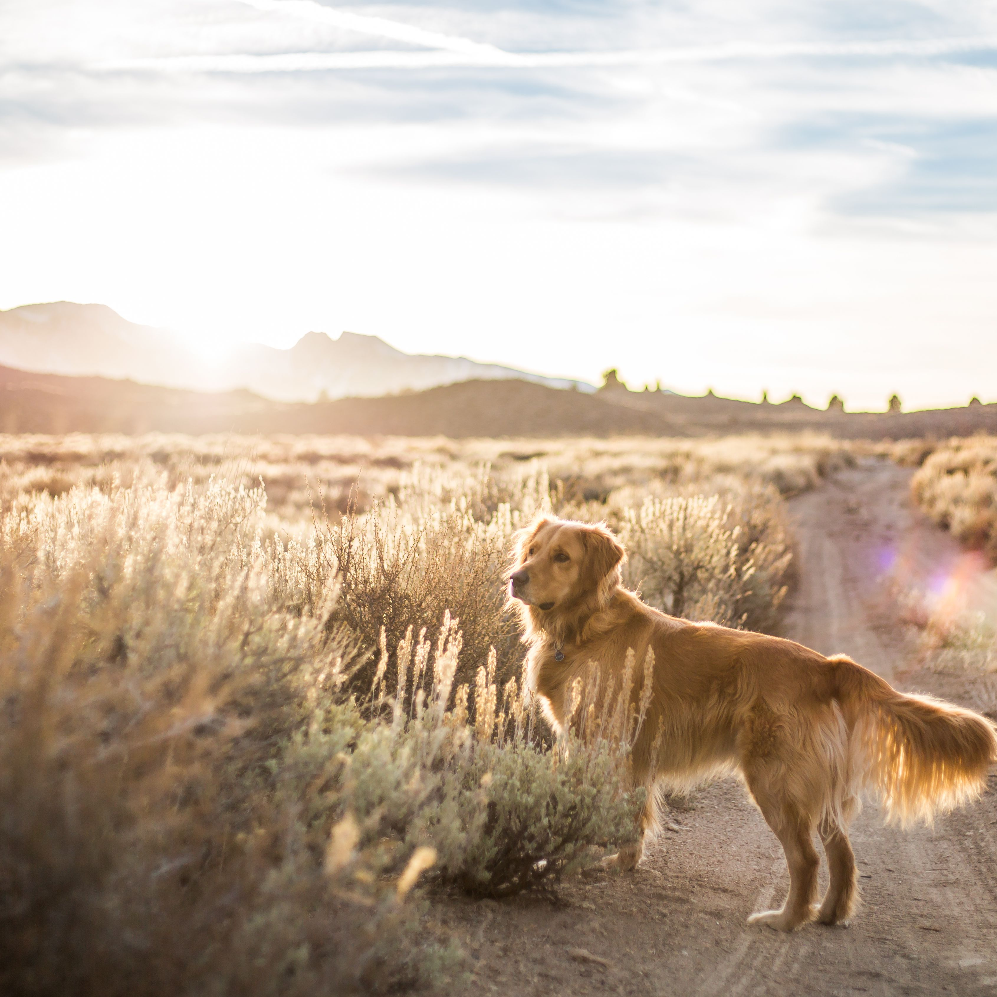 How To Keep Dogs Safe In The Desert