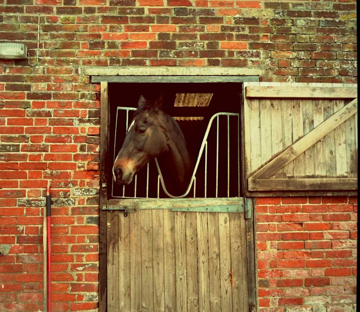 Horse looking out exterior stall door