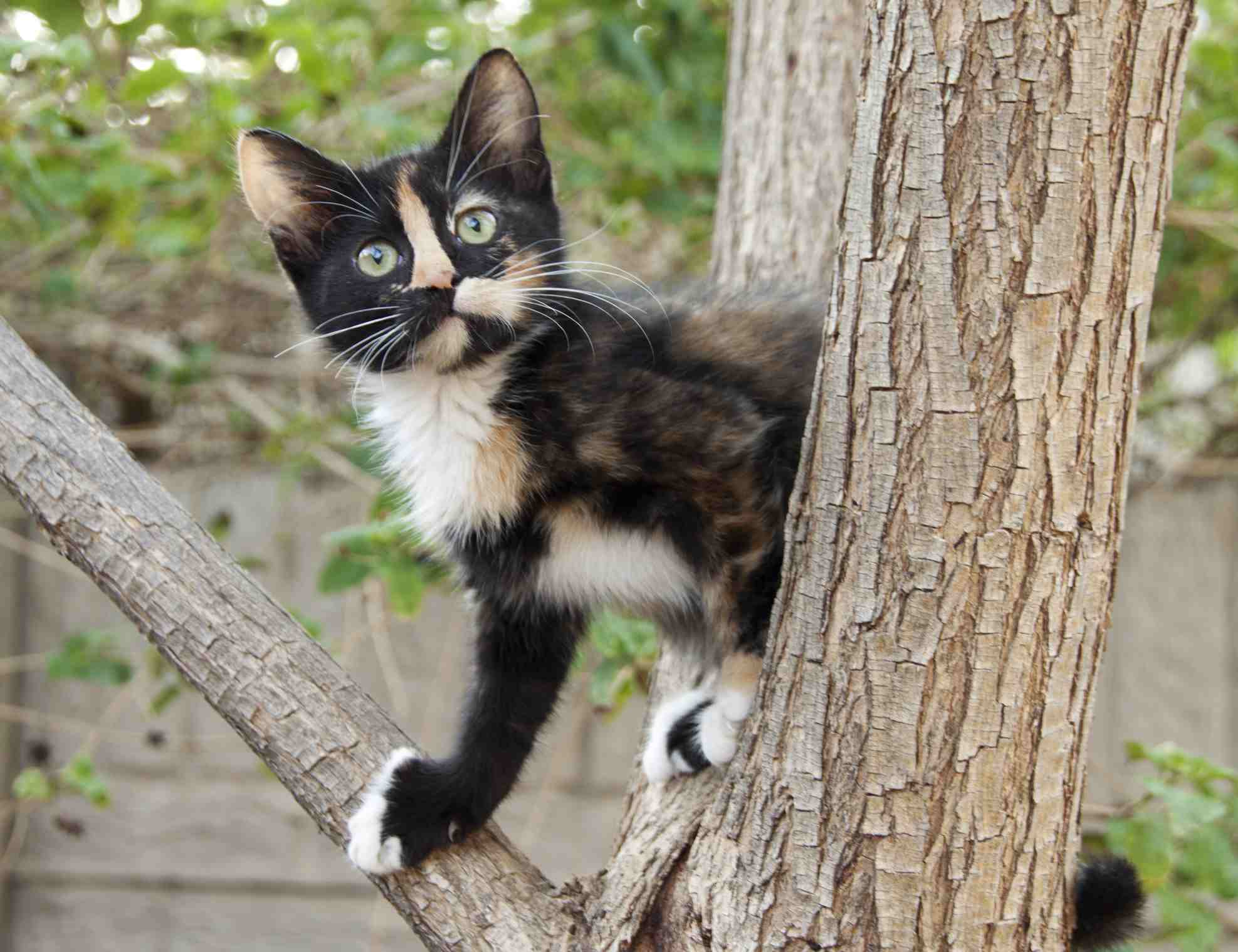 Is Your Cat a Pure Breed?