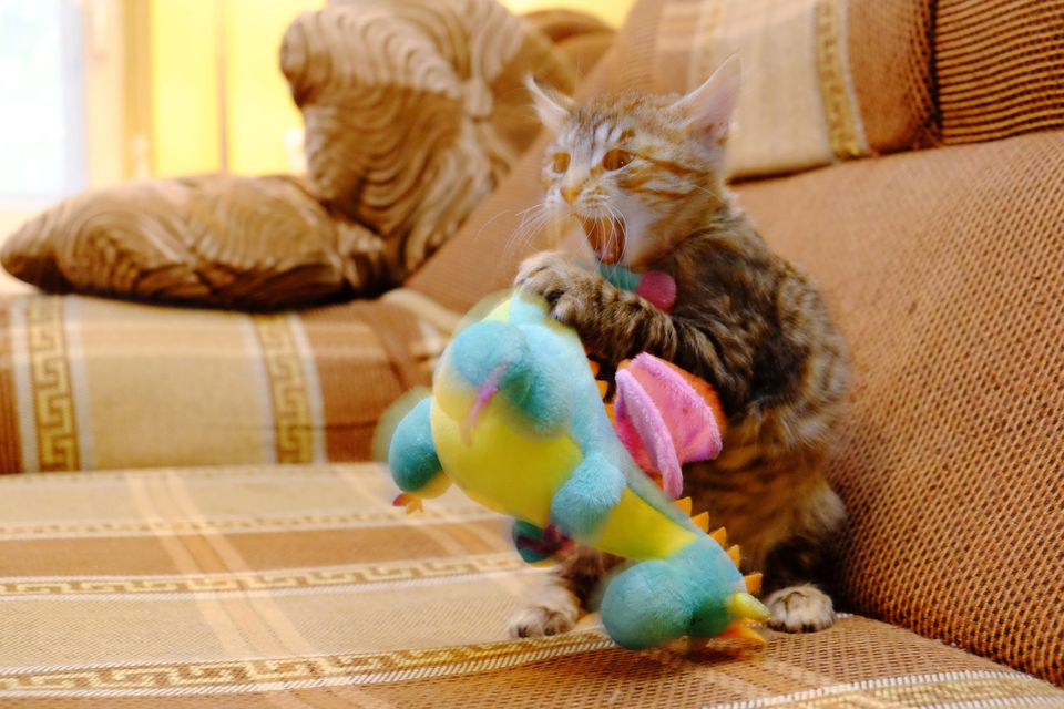 kitten with dinosaur toy