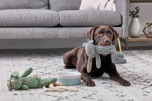 A Labrador Retriever chewing on a plush toy