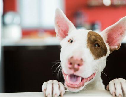 happy dog going to vet