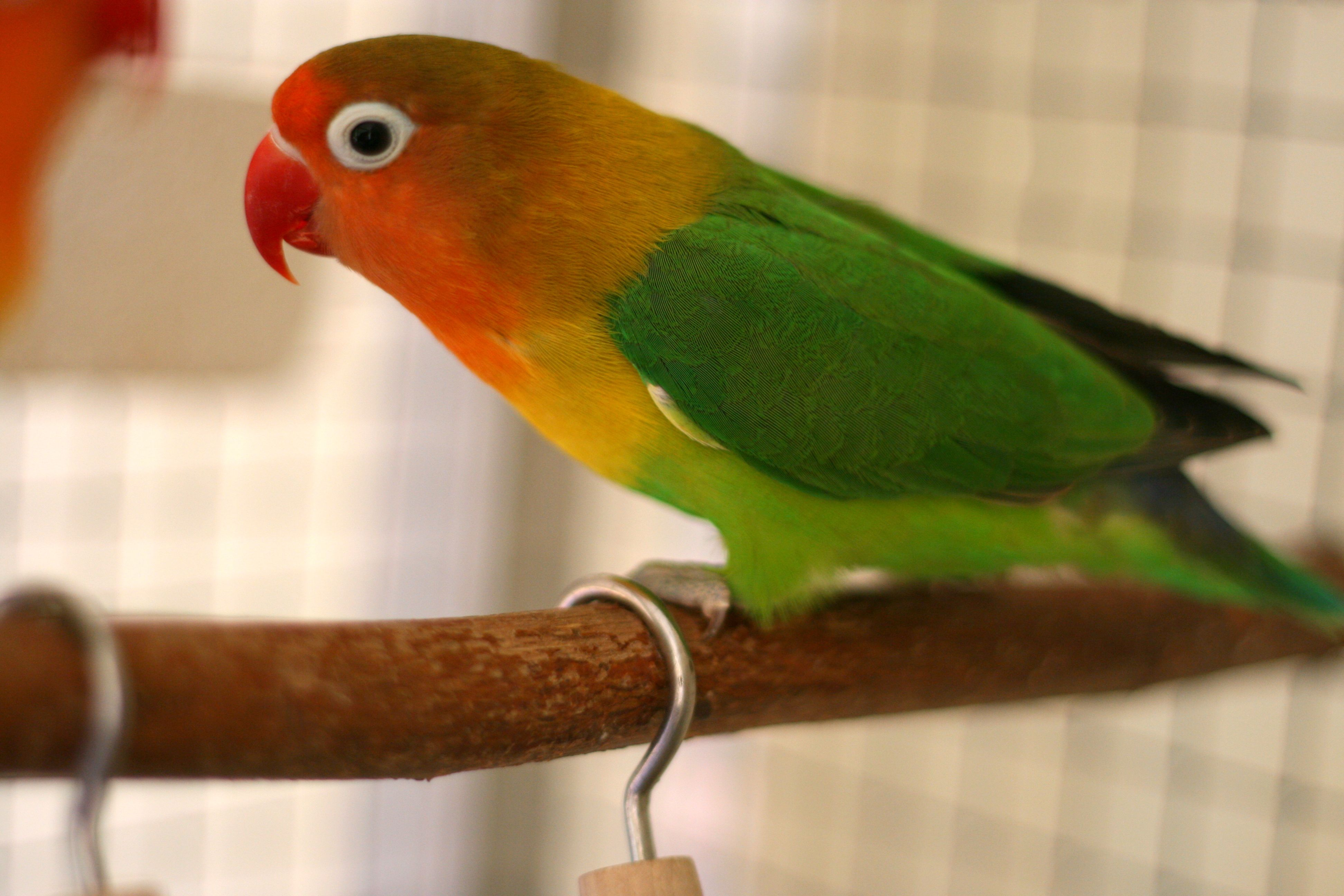 5 Tips to Keep Exotic Birds Warm During Winter
