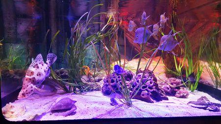 Choosing The Right Size Of Aquarium Equipment
