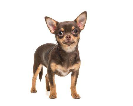 Best Ideas for Toy Dog Pet Names