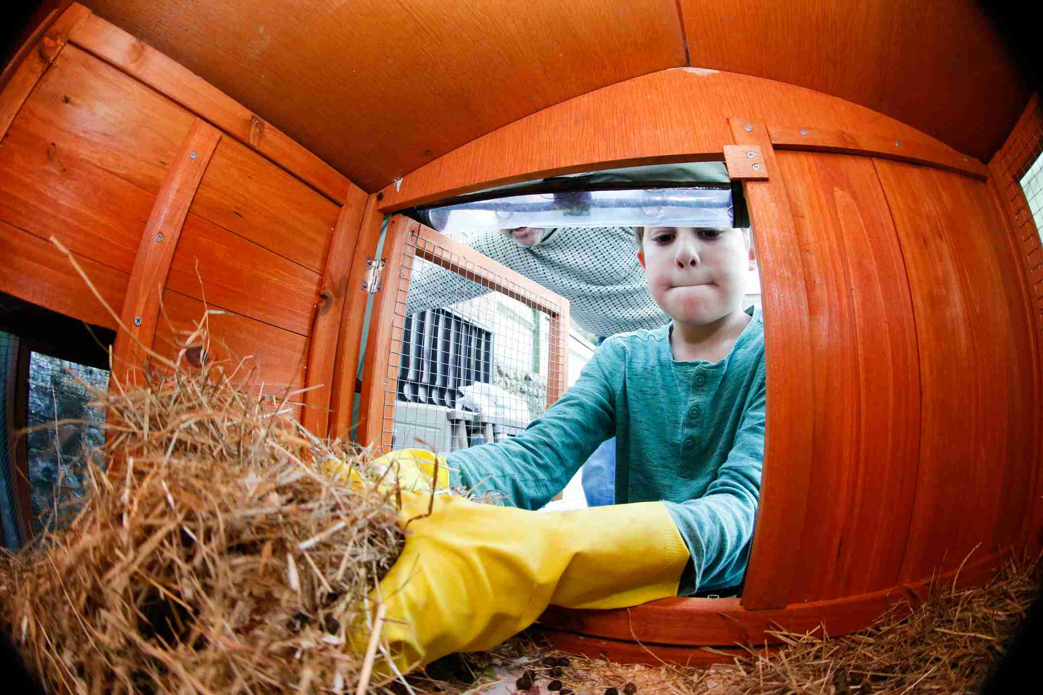 Boy cleaning rabbit hutch