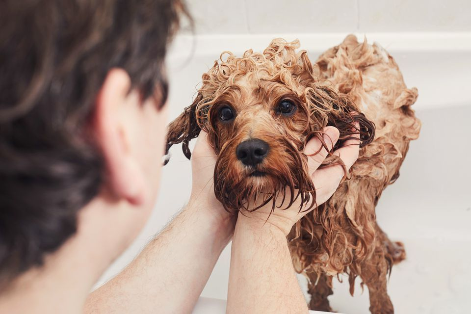 Man giving his pet dog a bath