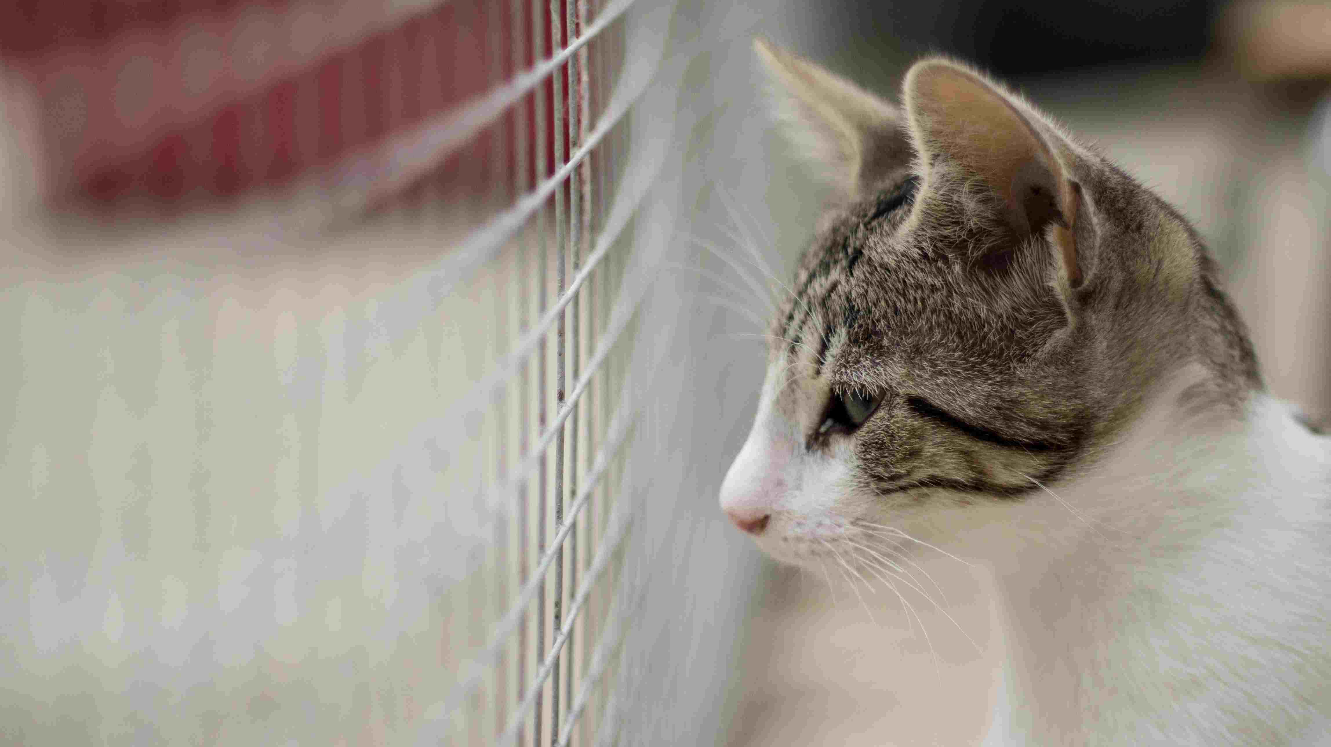 Close-Up Of Cat For Sale In Shelter