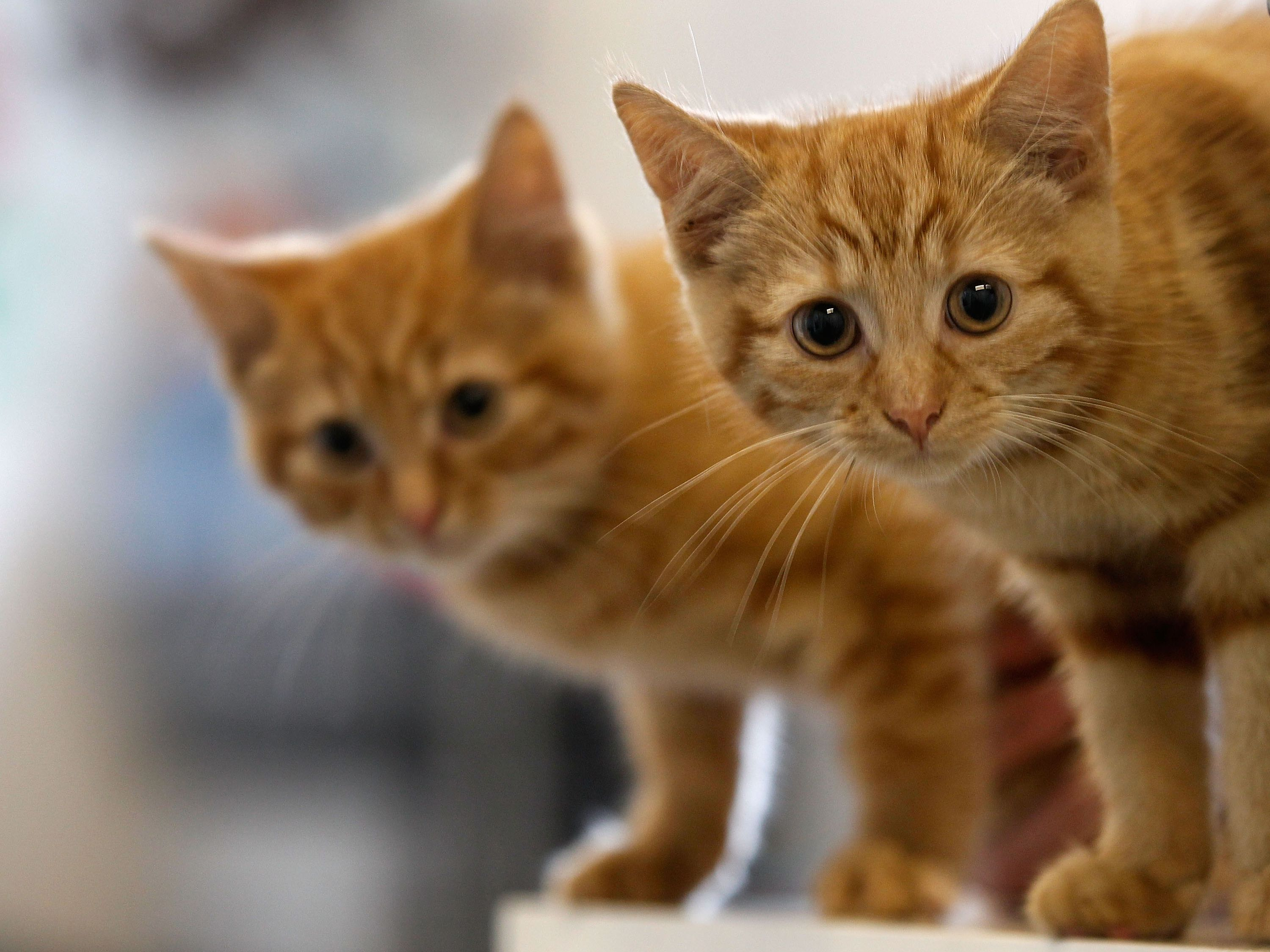 How To Treat Roundworms In Cats