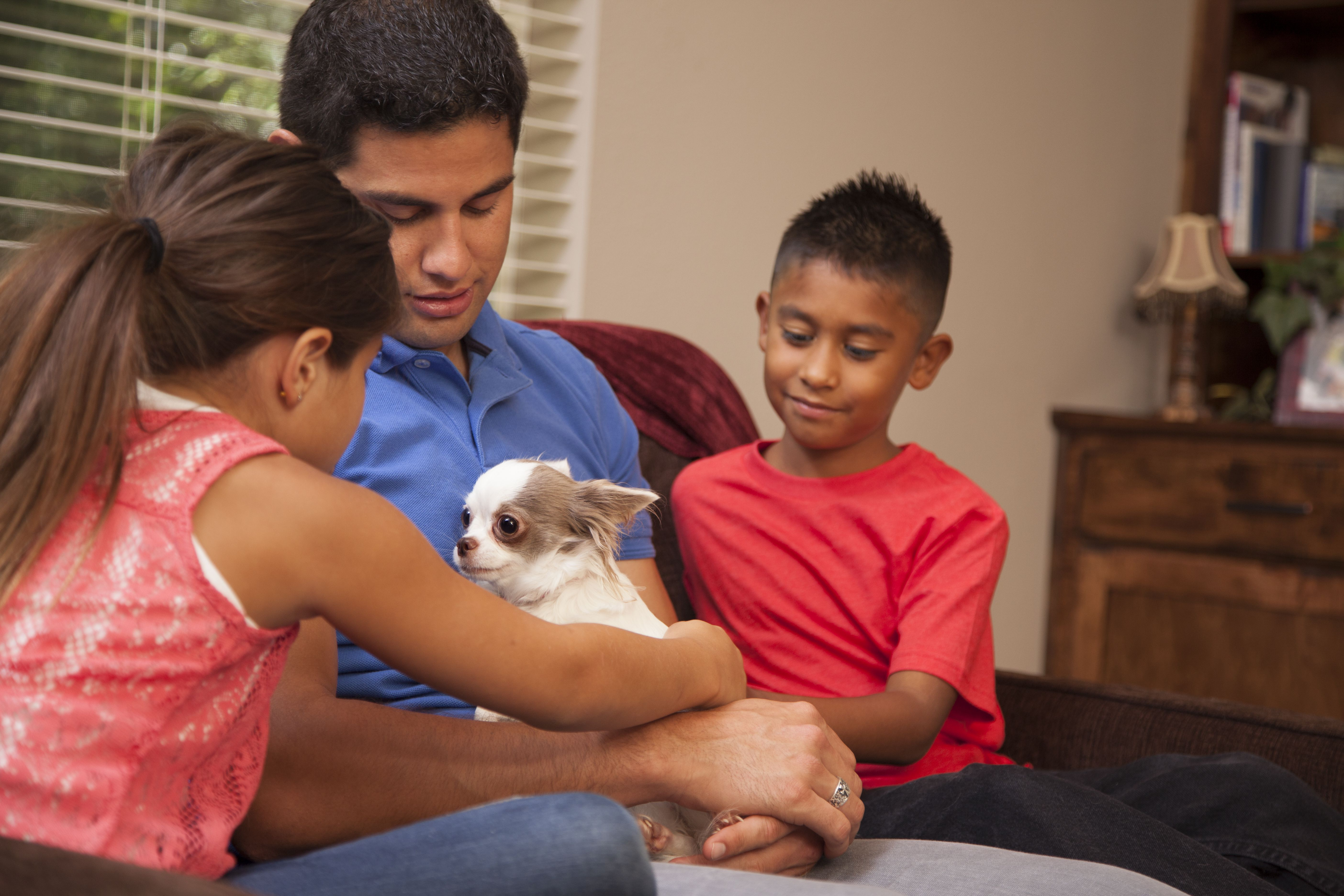 Father holds family pet Chihuahua dog at home. Children.