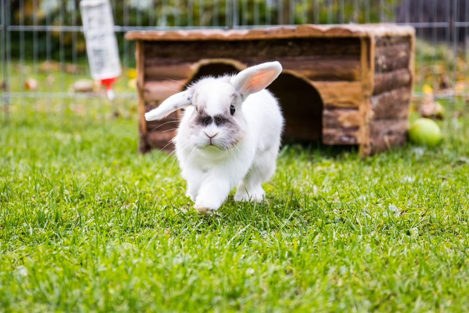 Close-Up Of Rabbit Walking On Grassy Field