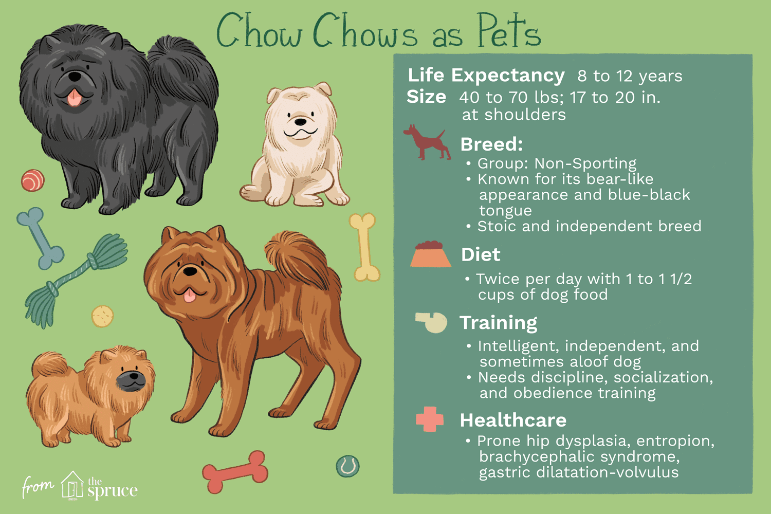 Chow Chow - Full Profile, History, and Care