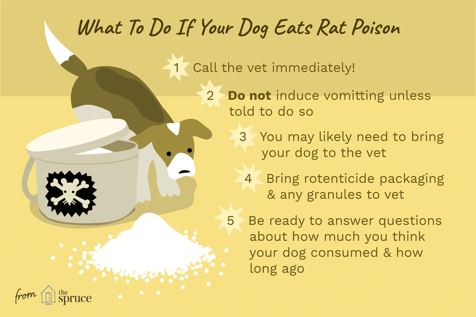 Illustration as to what to do if you dog eats rat poison.