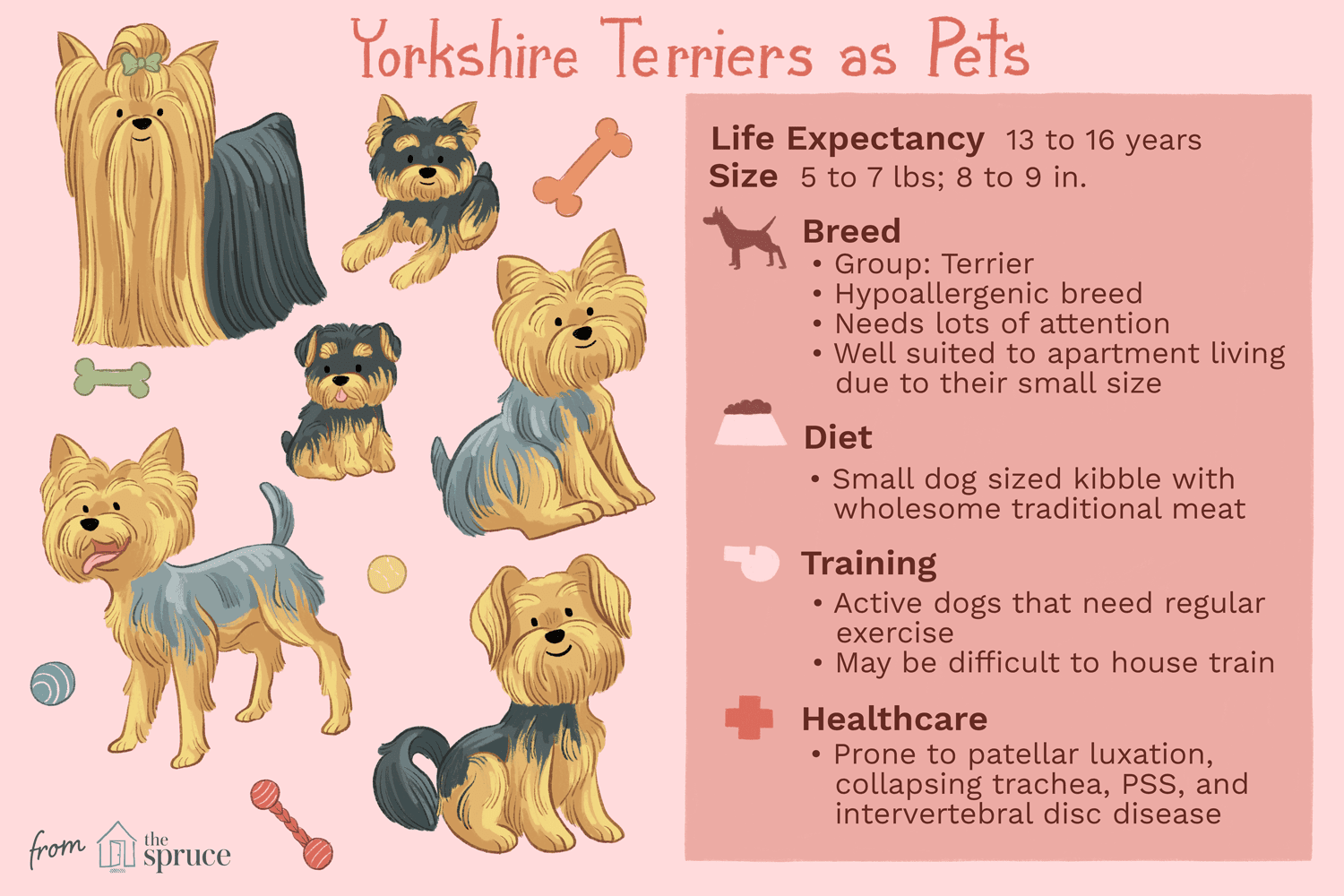 yorkshire terriers as pets illustration