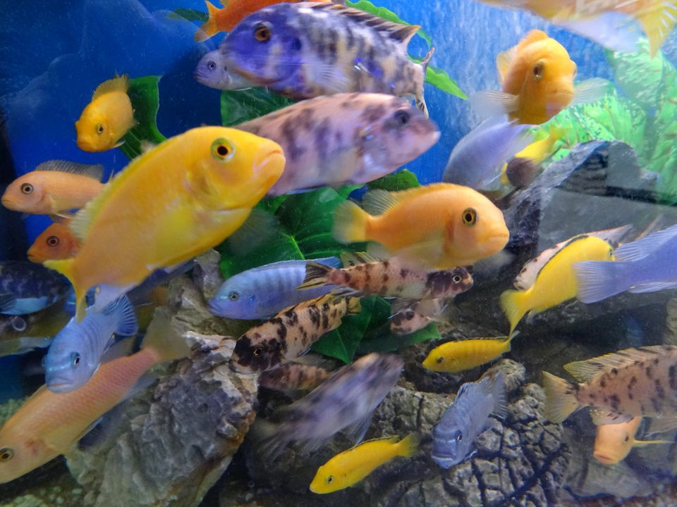 Fish in aquarium